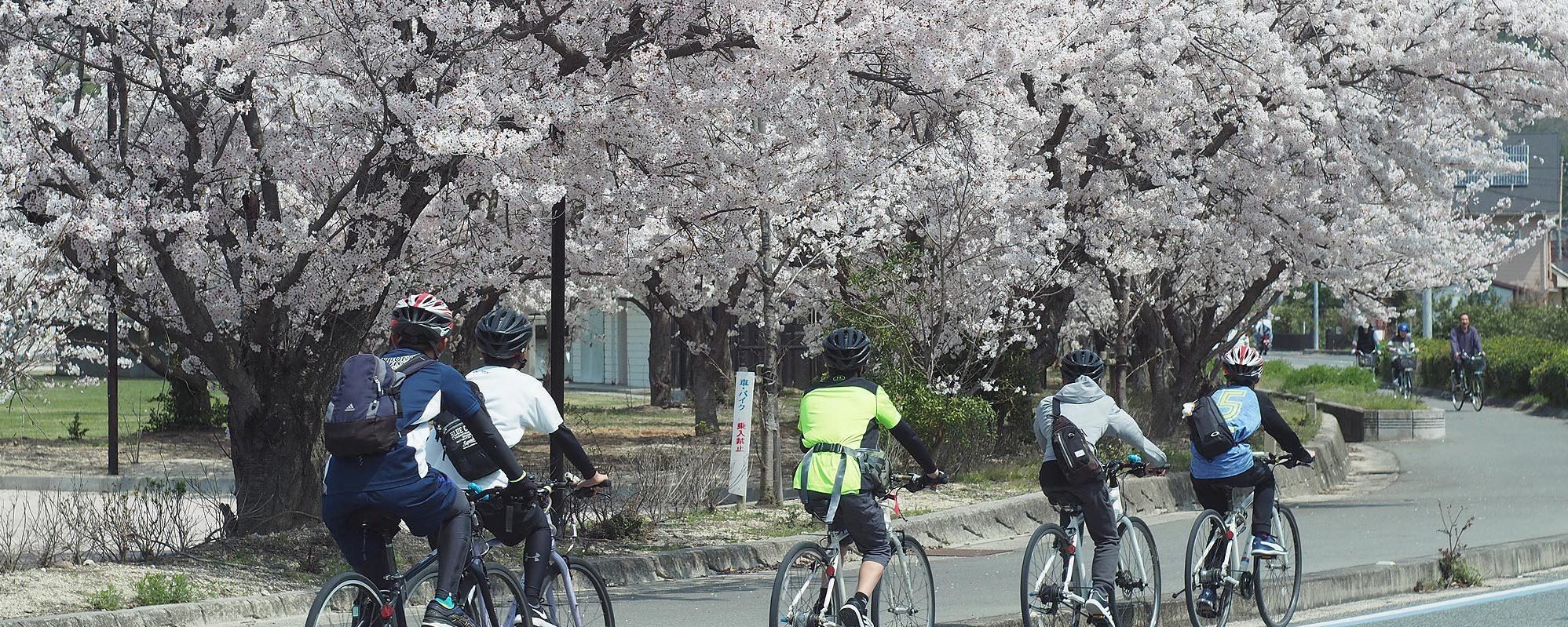 桜としまなみ海道サイクリング